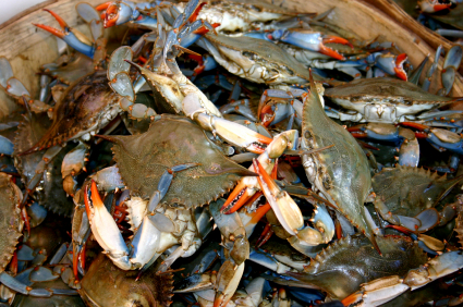 Maryland Blue Crab Names - Catonsville Gourmet